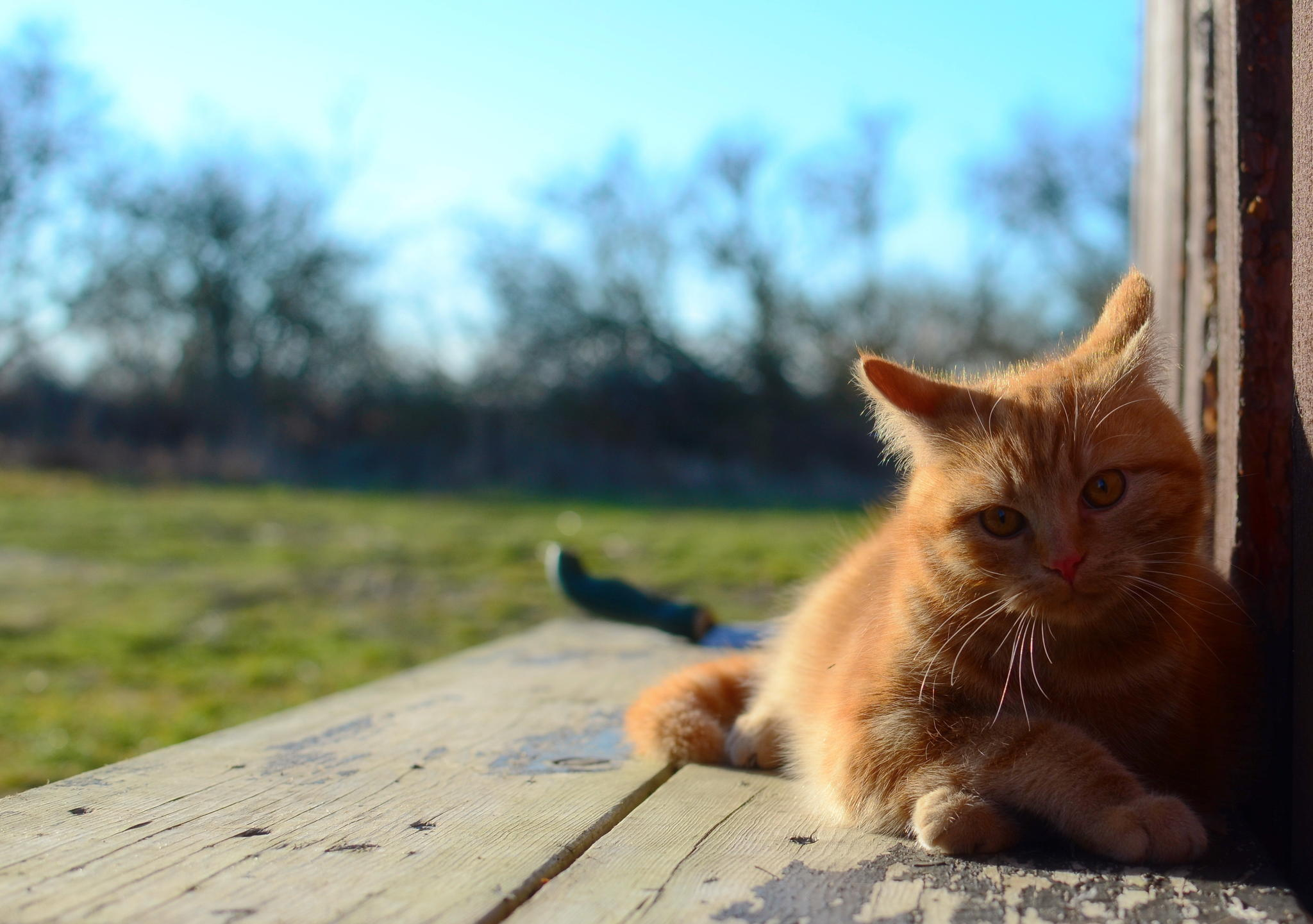 88635 Screensavers and Wallpapers Kitten for phone. Download Animals, Cat, Lies, Kitty, Kitten, Redhead pictures for free