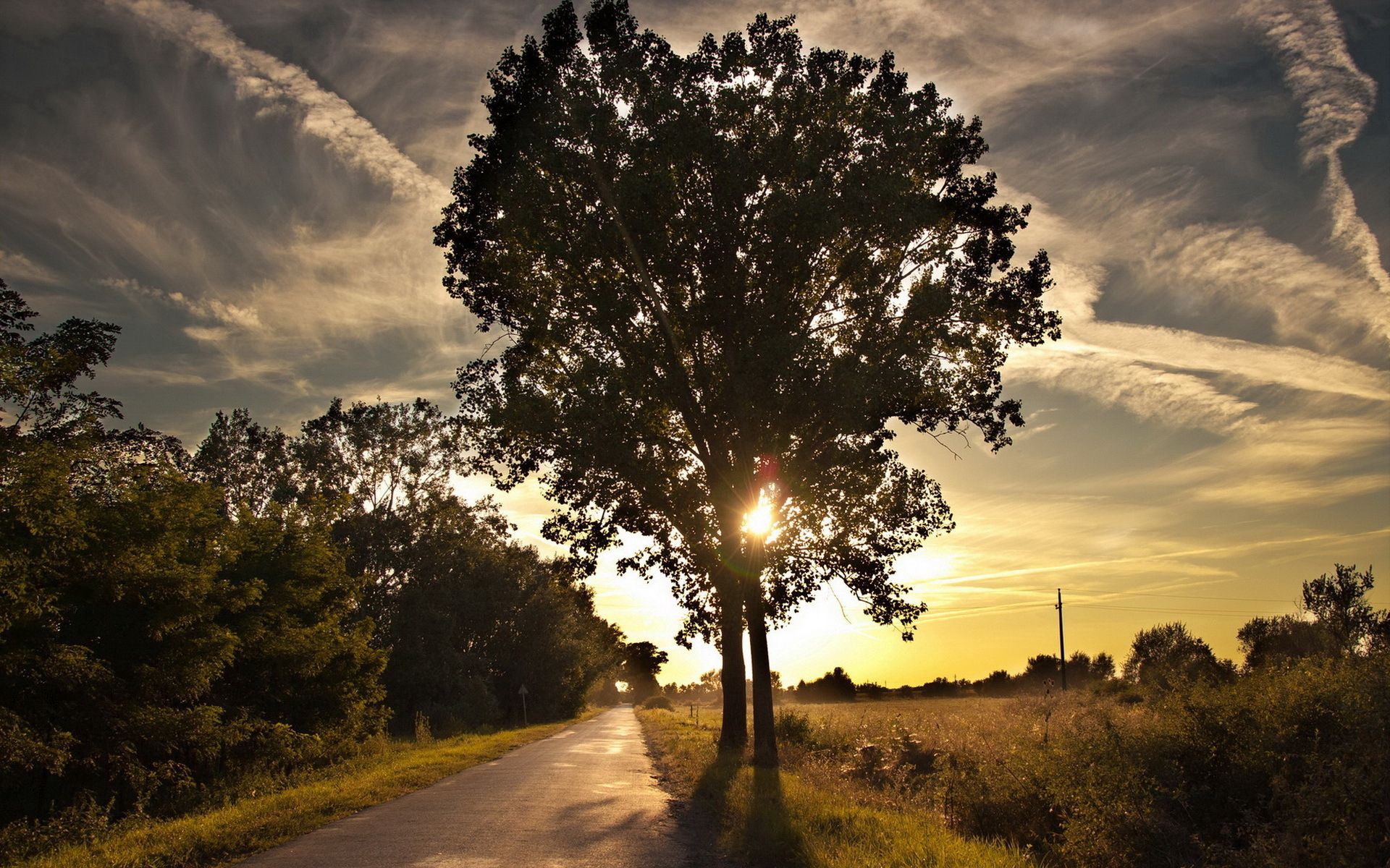 90705 Screensavers and Wallpapers Stroll for phone. Download Nature, Shine, Light, Wood, Tree, Path, Stroll, Trail pictures for free