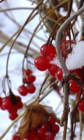 22764 скачать обои Растения, Зима, Снег, Кусты - заставки и картинки бесплатно