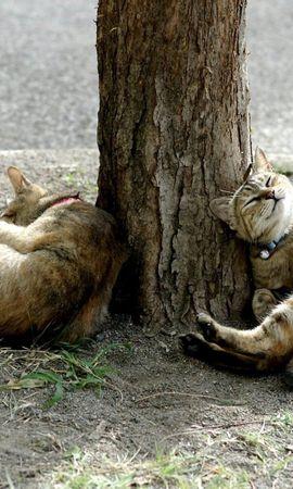 111946 baixar papel de parede Animais, Gatos, Madeira, Árvore, Deitar-Se, Mentir - protetores de tela e imagens gratuitamente