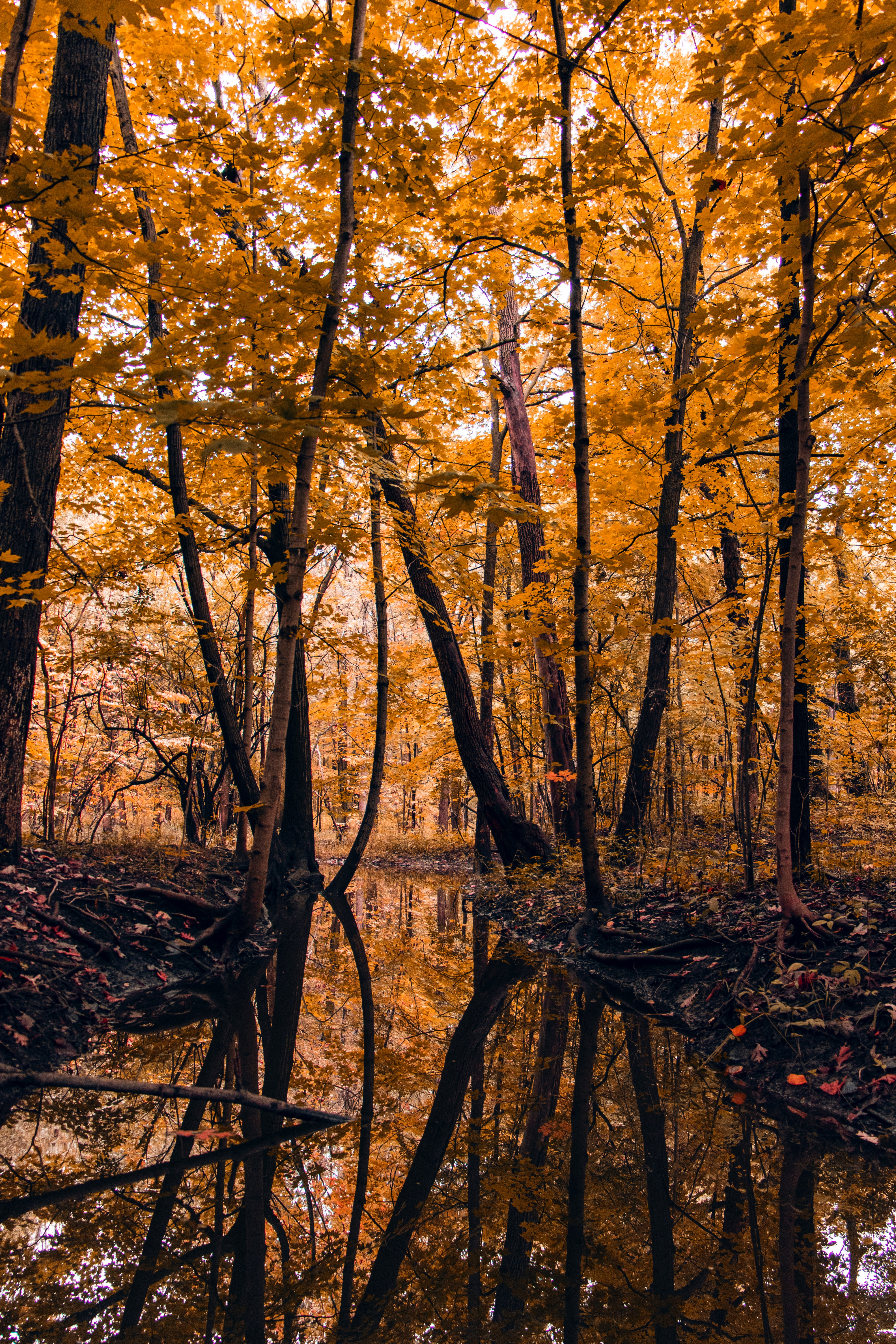 125490 download wallpaper Landscape, Nature, Rivers, Trees, Autumn, Forest screensavers and pictures for free