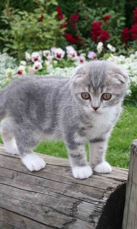 103042 download wallpaper Animals, Kitty, Kitten, Kid, Tot, Fluffy, Grass, Nice, Sweetheart, Flowers screensavers and pictures for free