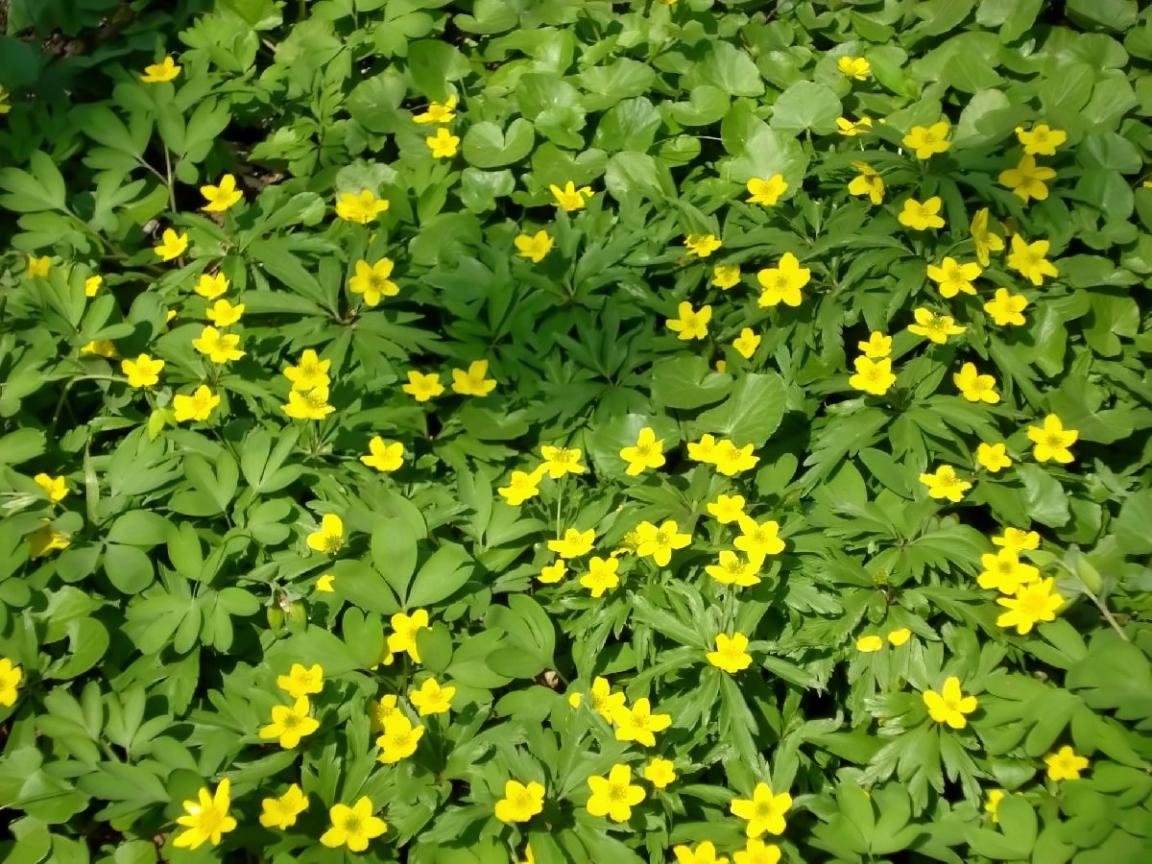 Скачать картинку Растения, Цветы, Трава в телефон бесплатно.