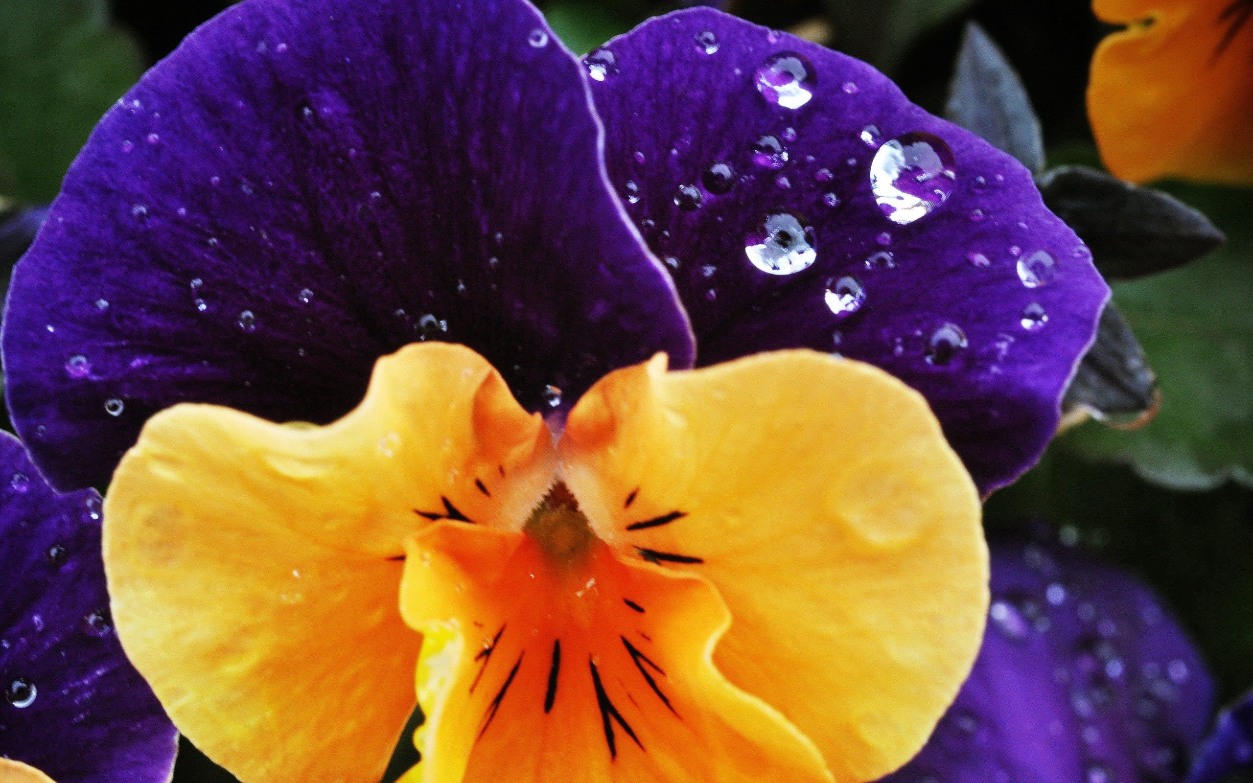 54161 download wallpaper Macro, Flower, Plant, Drops, Dew, Spotted, Spotty, Petals screensavers and pictures for free