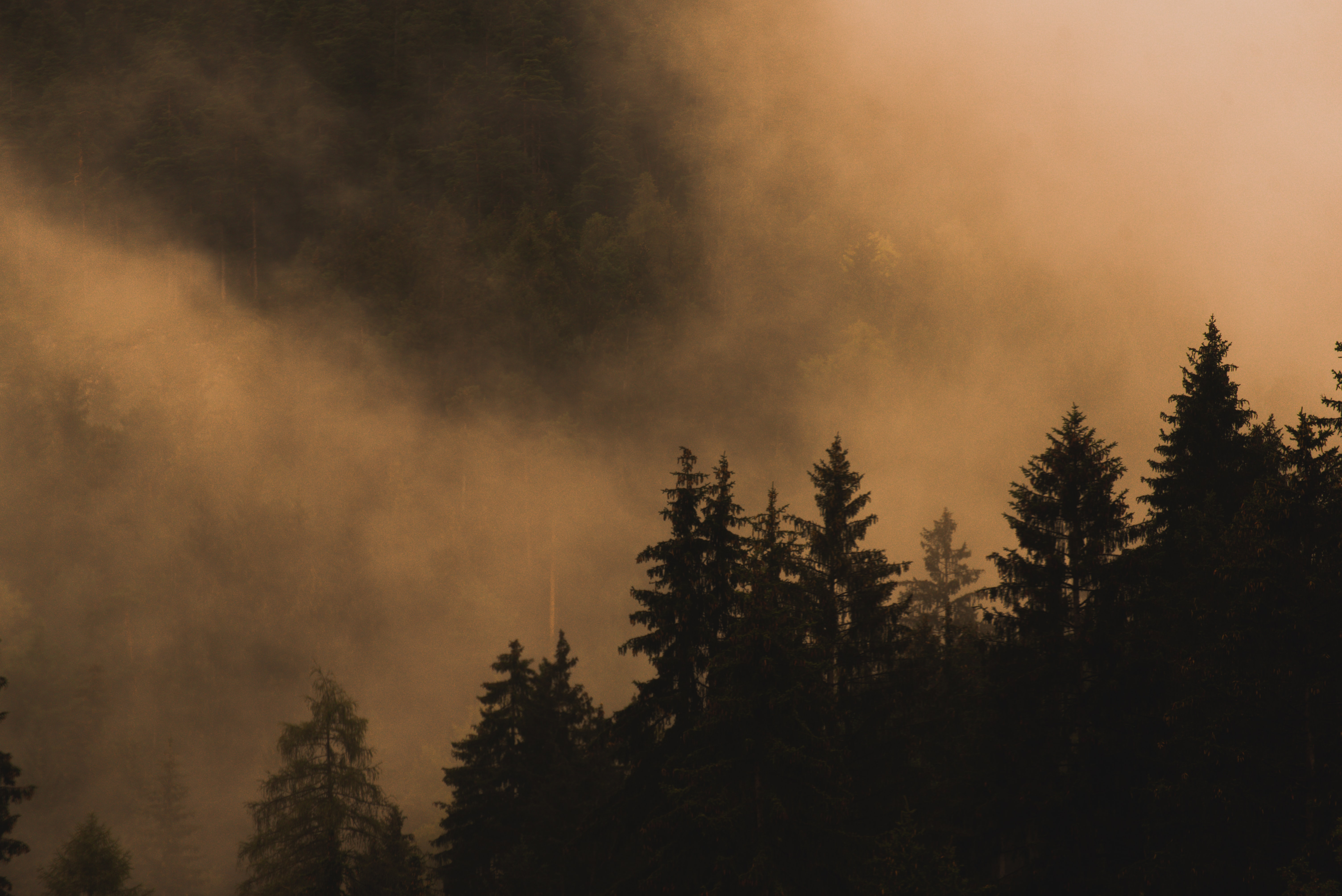 156748 download wallpaper Nature, Spruce, Fir, Trees, Fog, Smoke screensavers and pictures for free