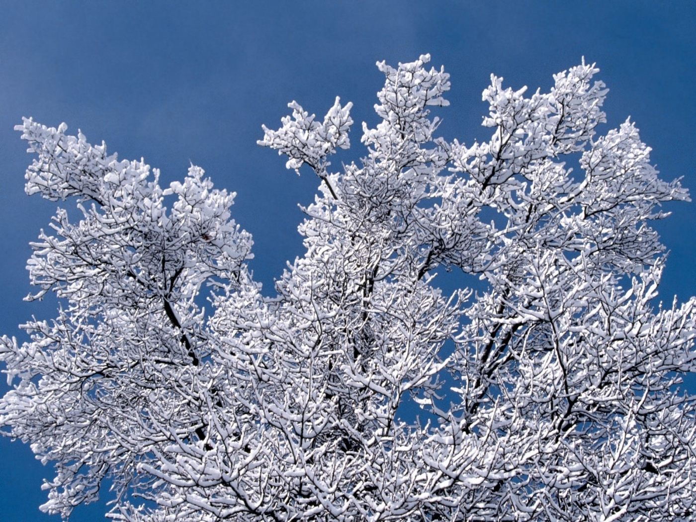 43036 download wallpaper Landscape, Winter, Trees screensavers and pictures for free