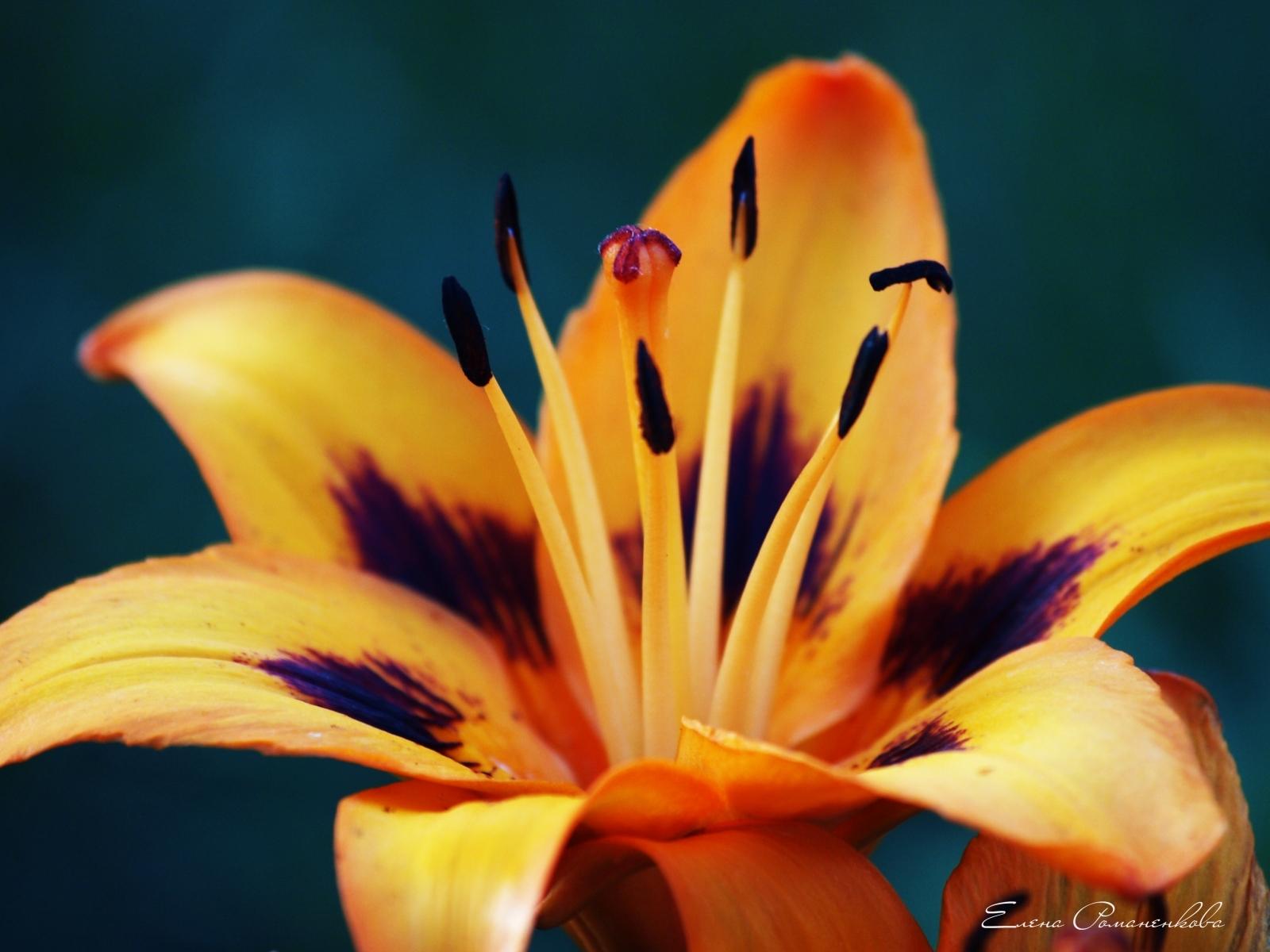 4237 скачать обои Растения, Цветы - заставки и картинки бесплатно