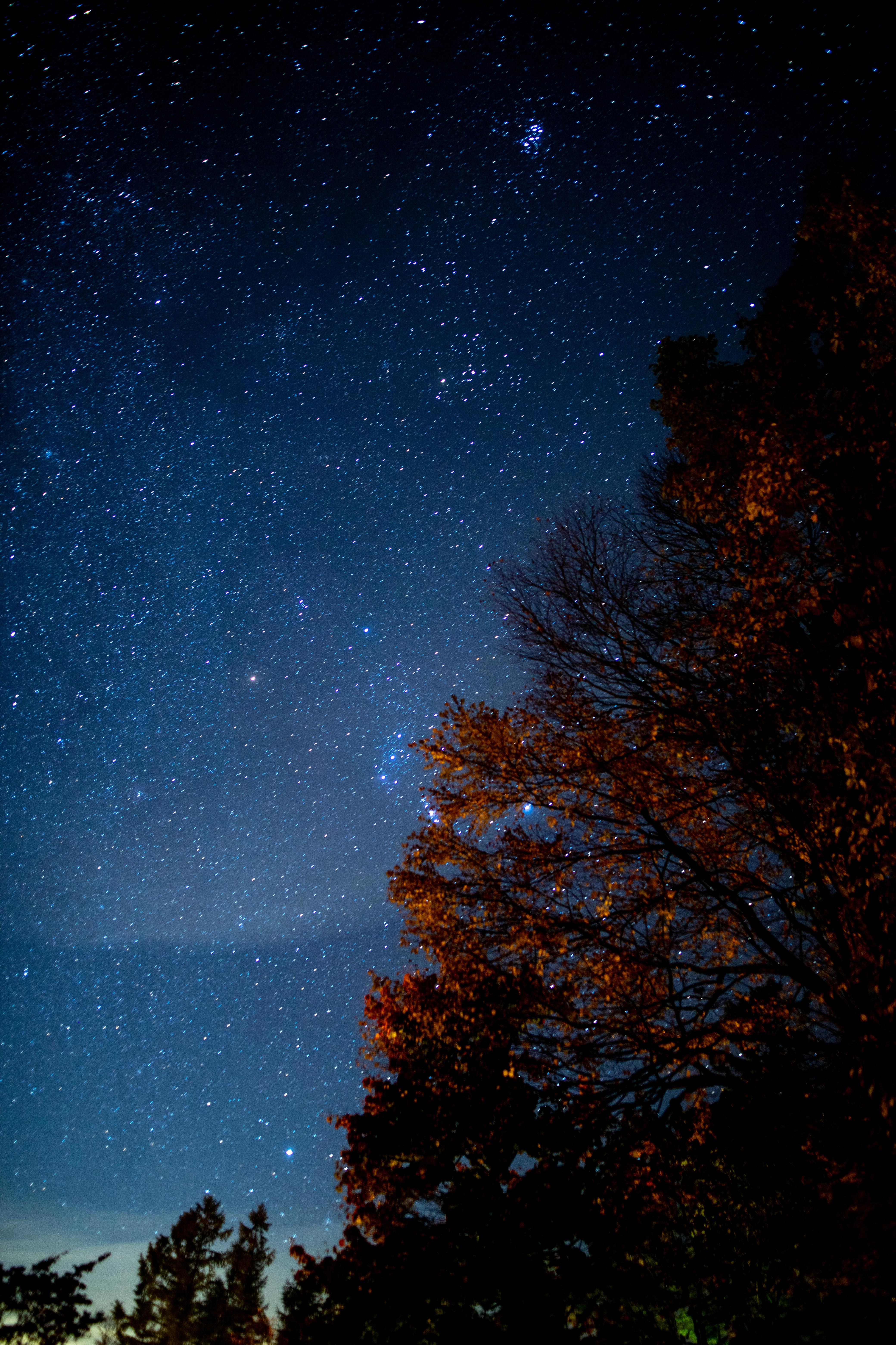 80614 Заставки и Обои Темные на телефон. Скачать Звезды, Ночь, Темные, Дерево, Звездное Небо, Темнота картинки бесплатно