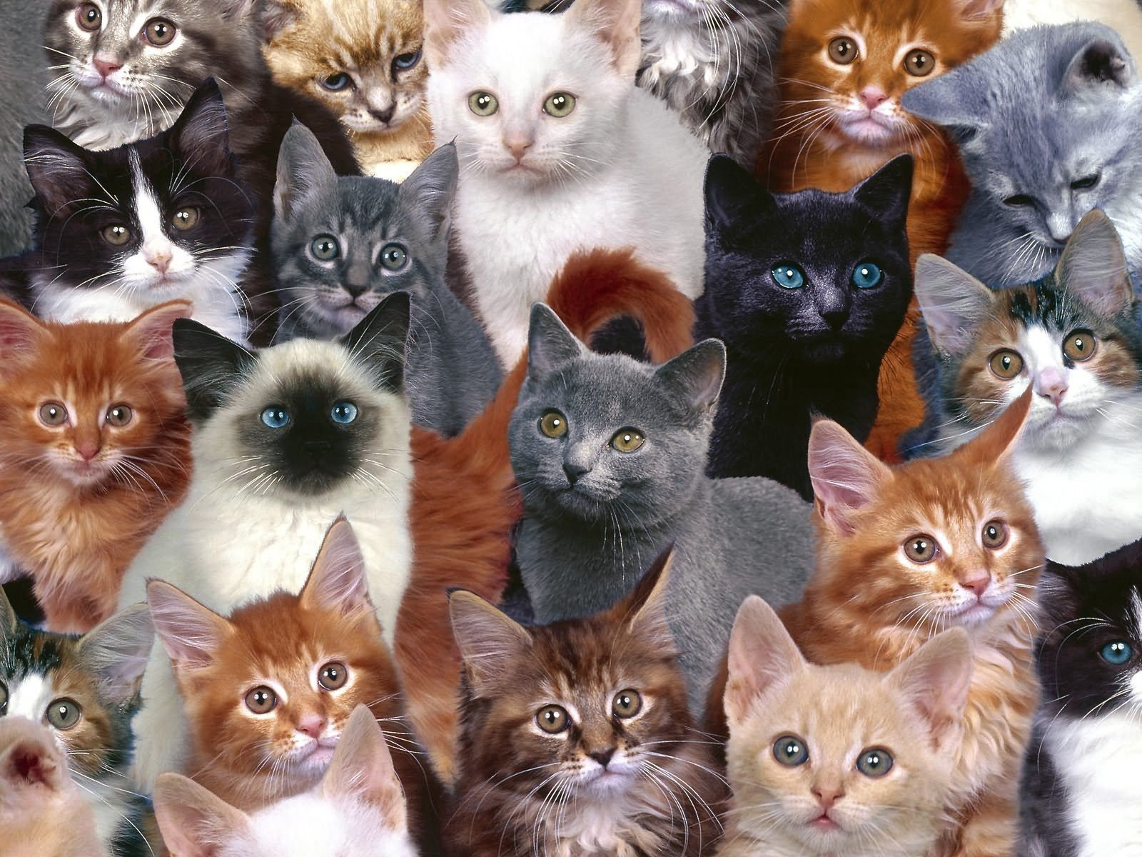 84250 Screensavers and Wallpapers Kittens for phone. Download Animals, Lot, Photoshop, Kittens pictures for free