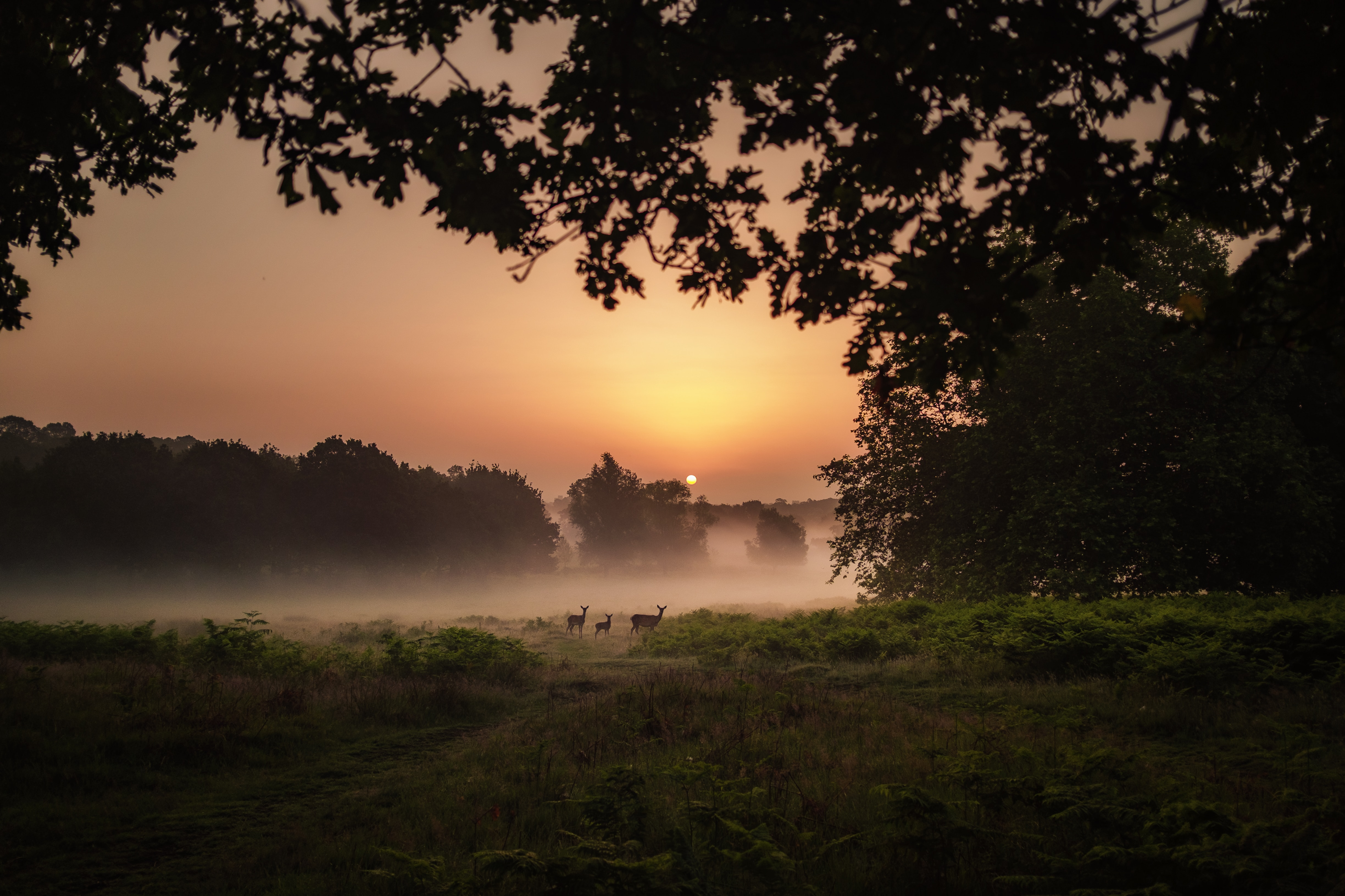 120110 download wallpaper Deers, Fog, Sunset, Dusk, Twilight, Nature screensavers and pictures for free