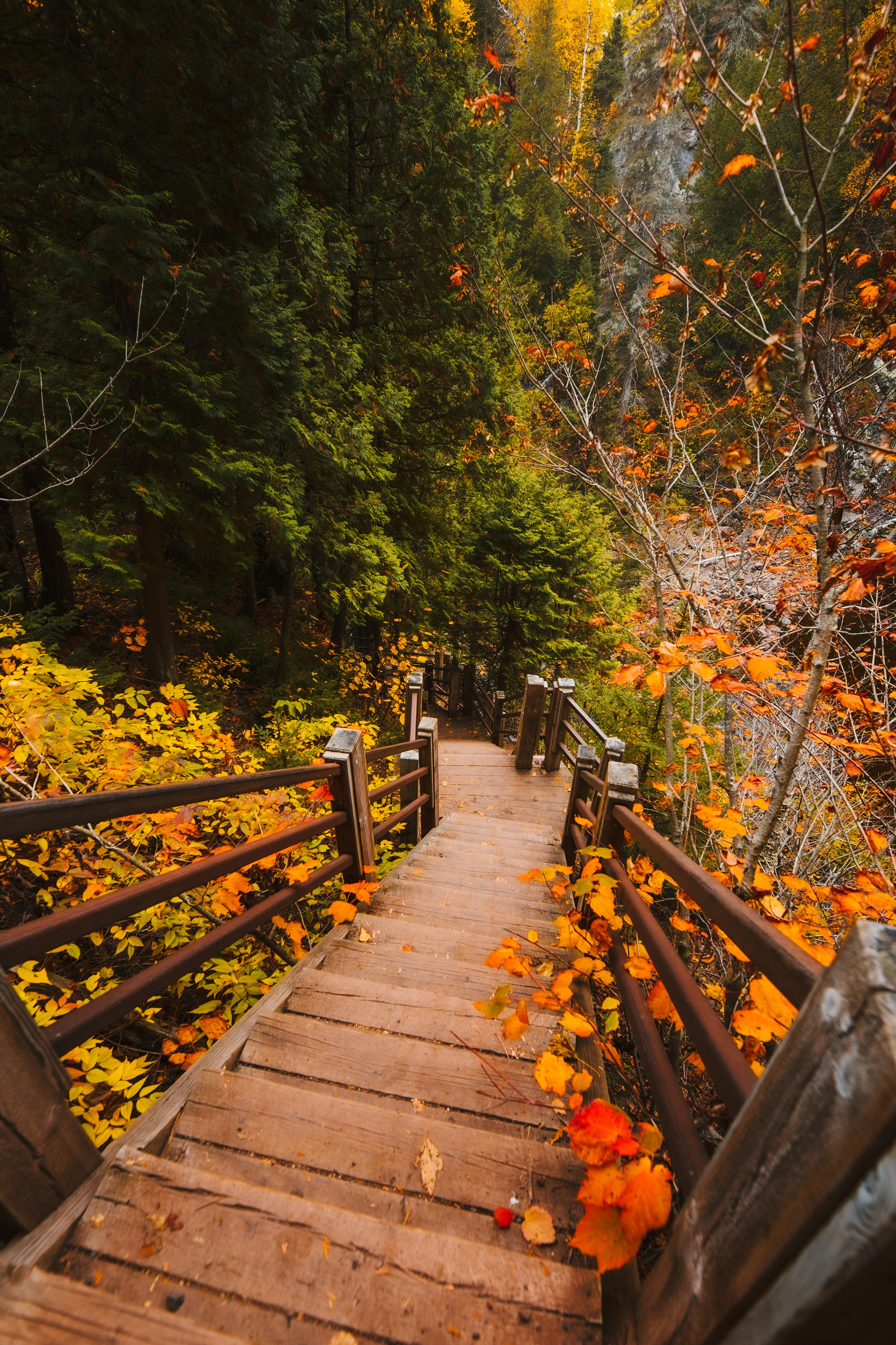 131495 скачать обои Осень, Природа, Листья, Ветки, Лестница, Ступени - заставки и картинки бесплатно