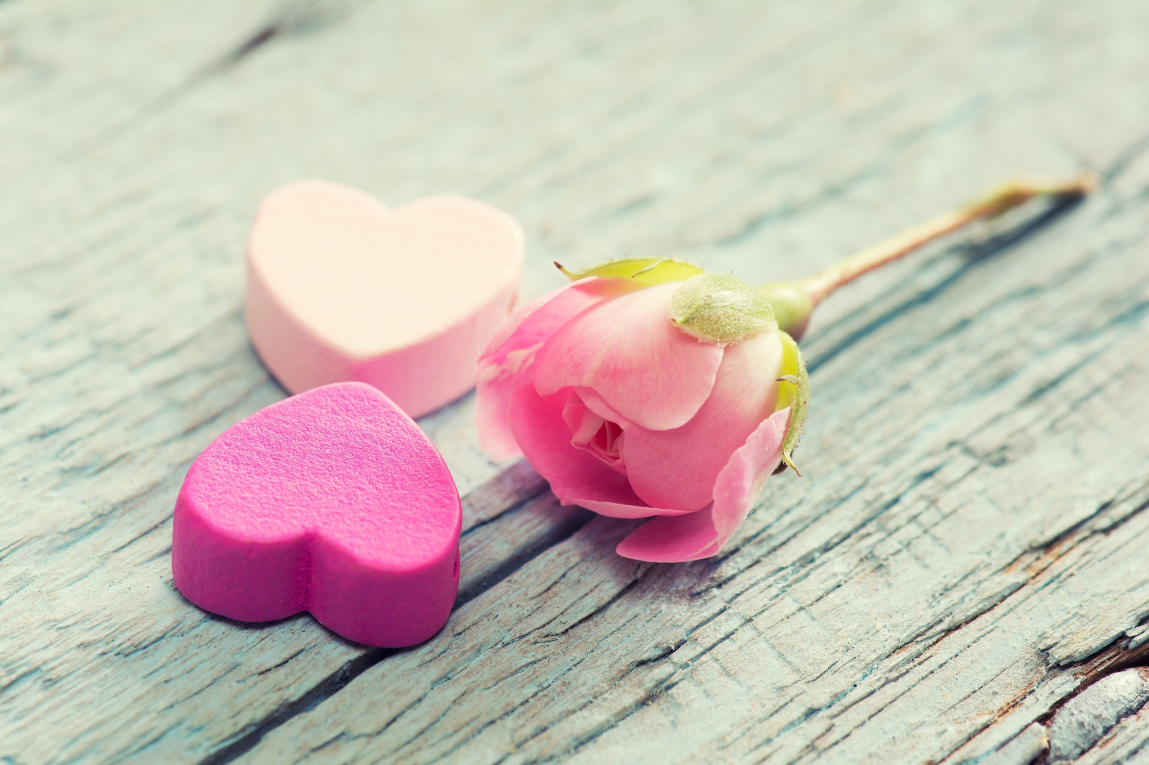 145484 download wallpaper Love, Heart, Flower, Tenderness, Pink screensavers and pictures for free