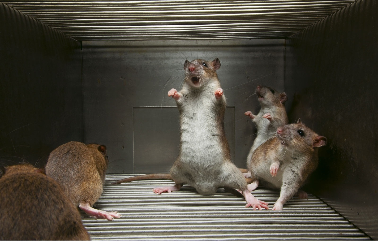 25916 Screensavers and Wallpapers Rodents for phone. Download Animals, Rodents pictures for free