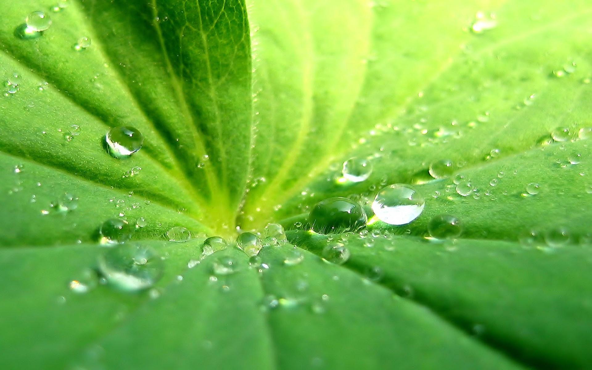 25020 скачать обои Растения, Вода, Листья, Капли - заставки и картинки бесплатно