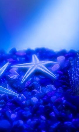 20131 download wallpaper Animals, Sea, Shells, Starfish screensavers and pictures for free