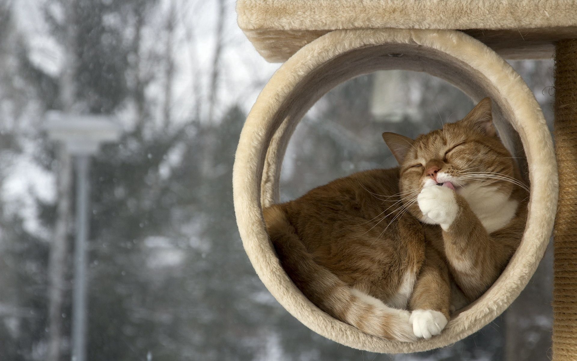 128942 download wallpaper Animals, Cat, To Lie Down, Lie, Lick Your Lips, Licking, Relaxation, Rest screensavers and pictures for free