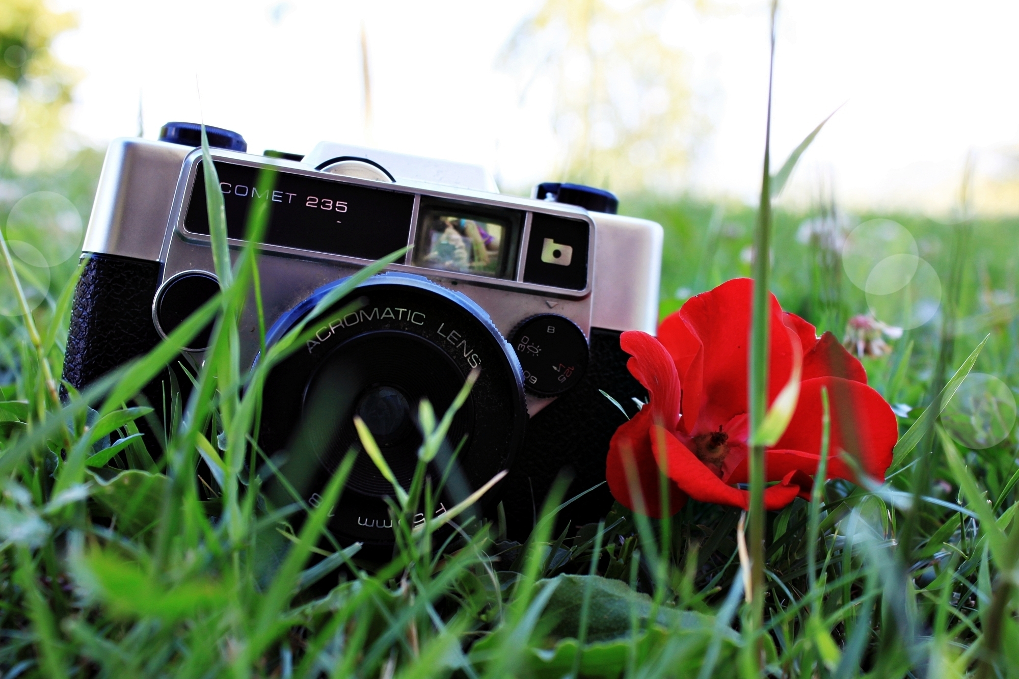 52007 download wallpaper Grass, Background, Flower, Plant, Miscellanea, Miscellaneous, Lens, Mood, Camera, Poppy, Floweret, Moods screensavers and pictures for free
