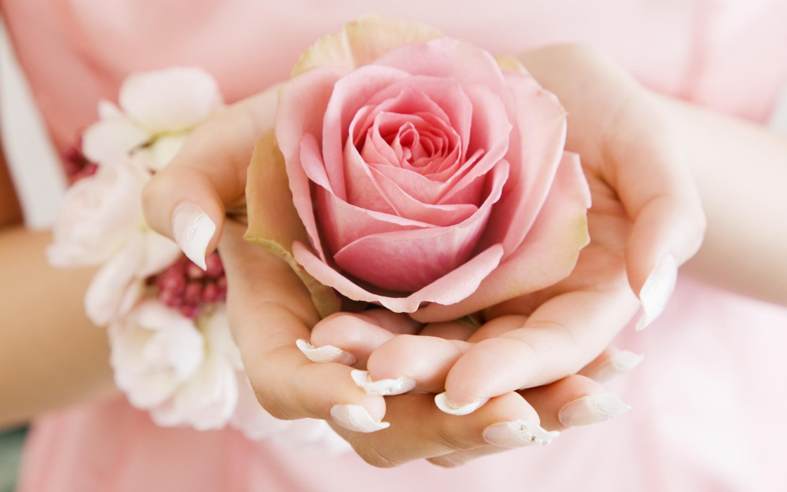 5372 скачать обои Растения, Цветы, Розы - заставки и картинки бесплатно