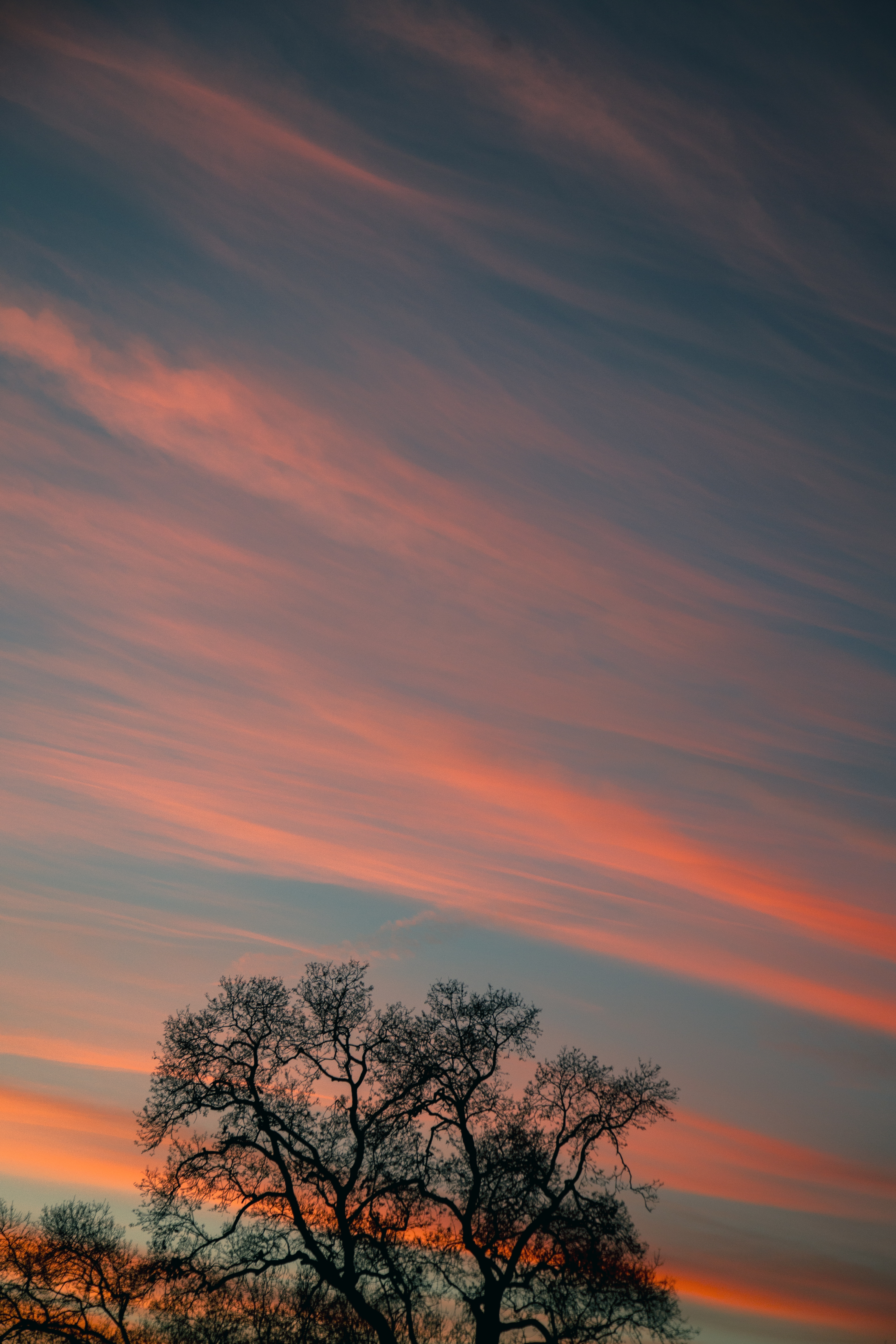 154809 download wallpaper Nature, Wood, Tree, Branches, Sky, Clouds, Sunset, Stripes, Streaks screensavers and pictures for free