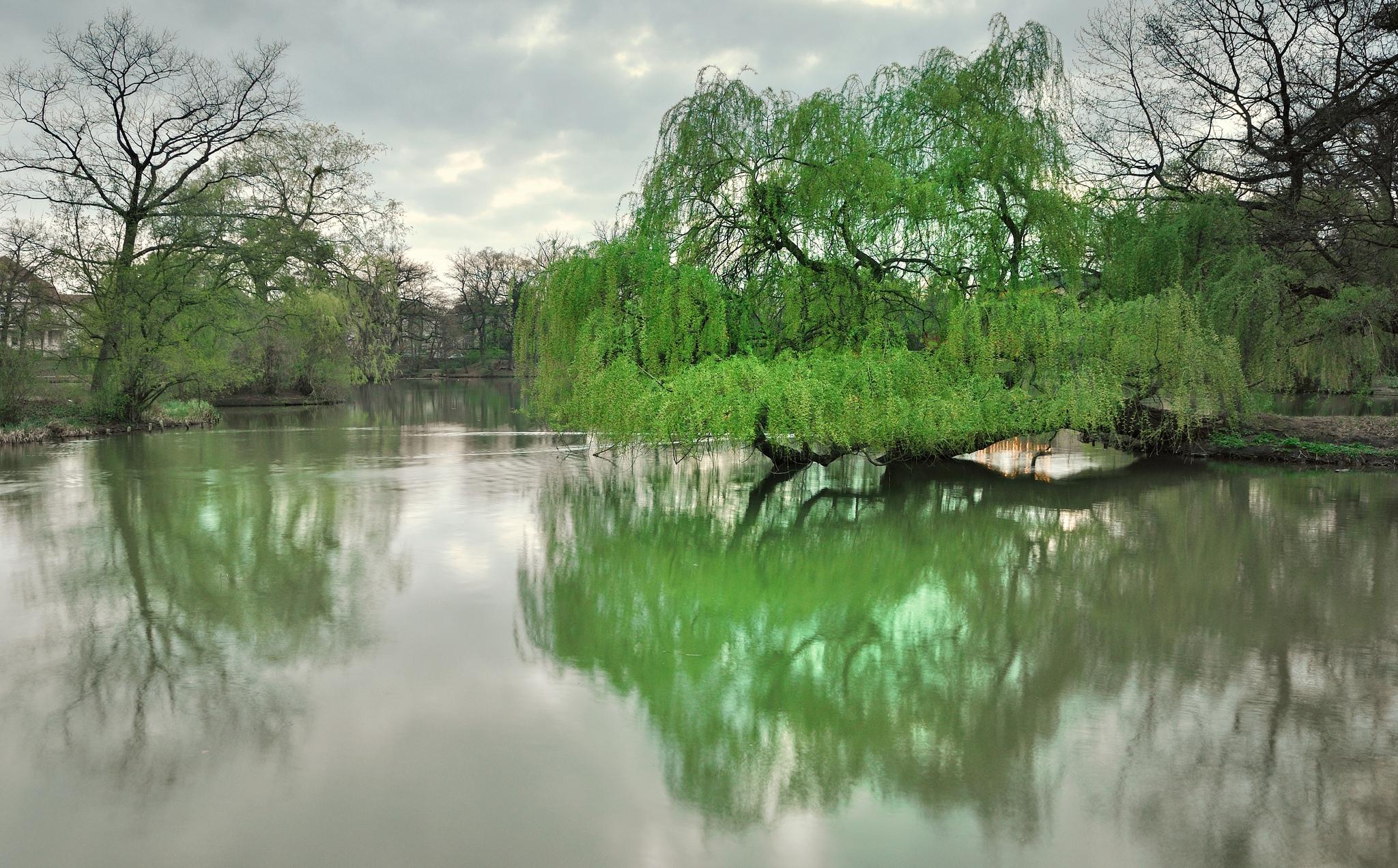140243壁紙のダウンロード自然, ドレスデン, 公園, 湖, 木, 春-スクリーンセーバーと写真を無料で
