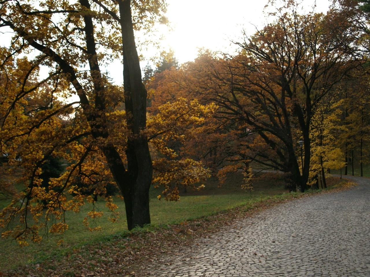 9848 скачать обои Пейзаж, Деревья, Дороги, Осень - заставки и картинки бесплатно