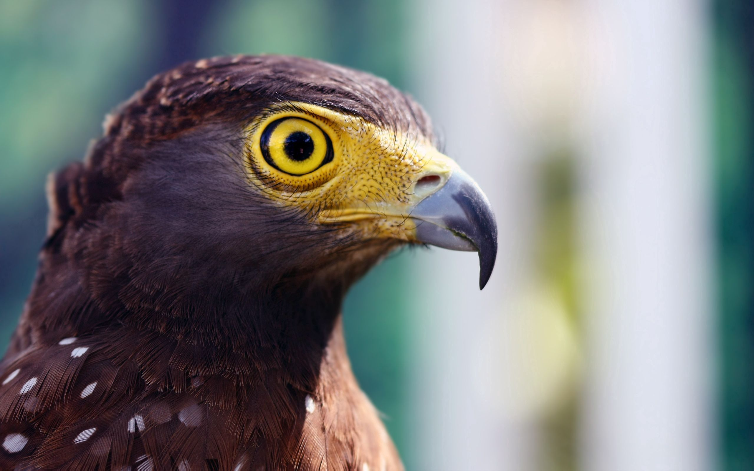 136762 download wallpaper Animals, Eagle, Head, Beak, Striped, Eye screensavers and pictures for free