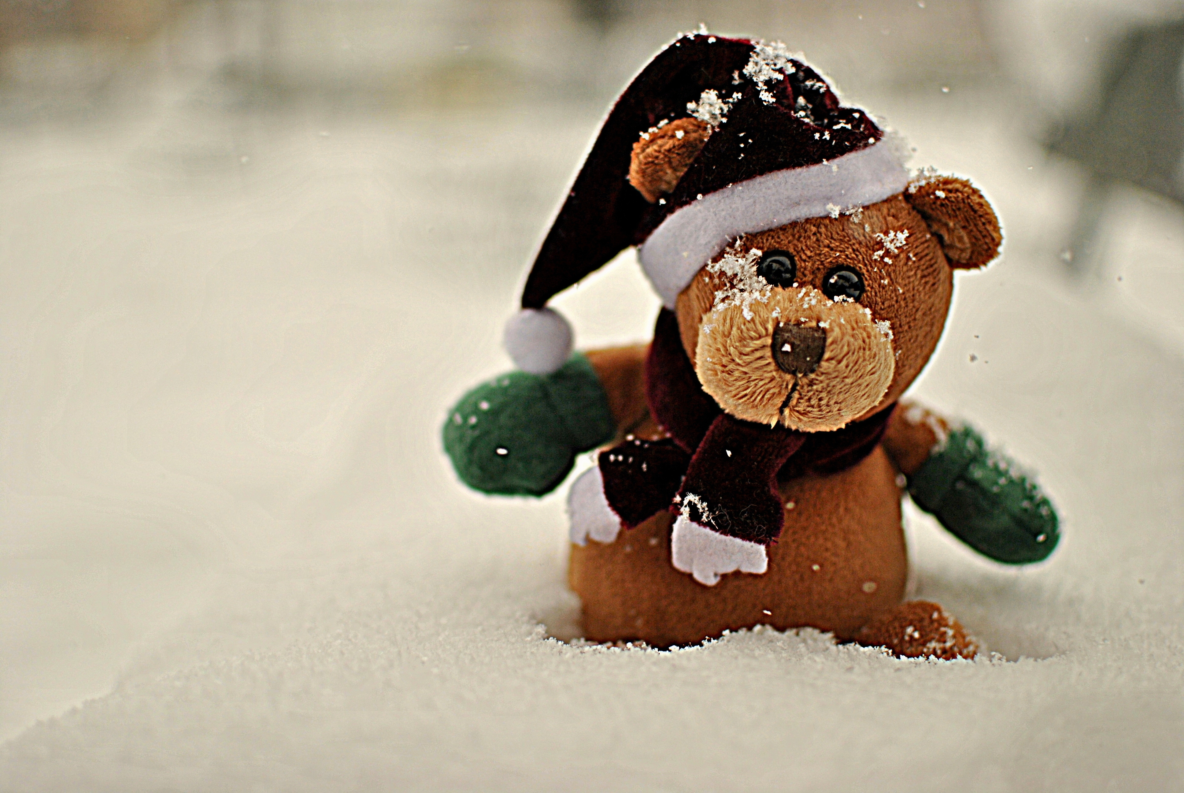 127155 Screensavers and Wallpapers Bear for phone. Download Snow, Miscellanea, Miscellaneous, Bear, Plush pictures for free