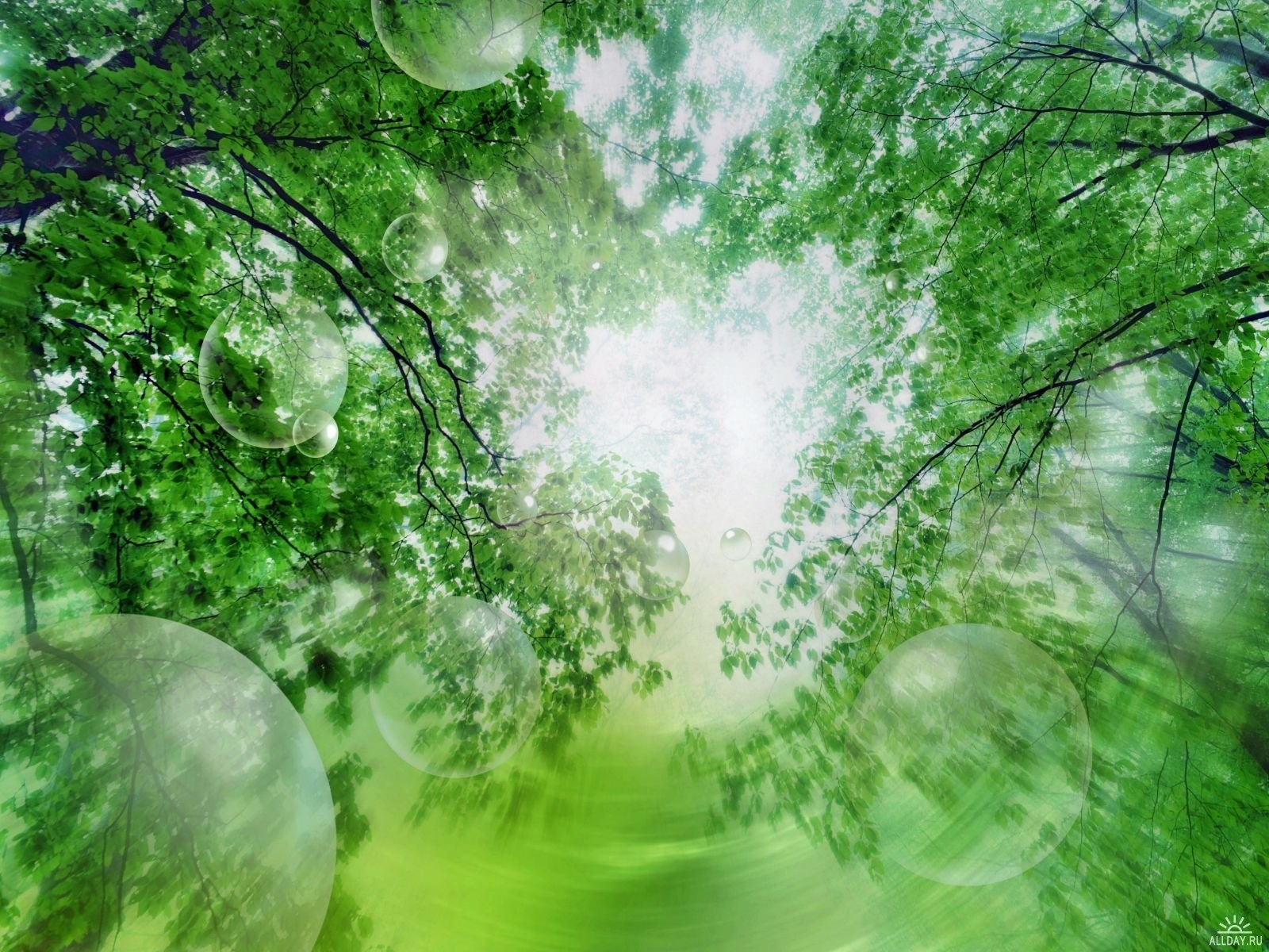 4147 скачать обои Пейзаж, Деревья - заставки и картинки бесплатно