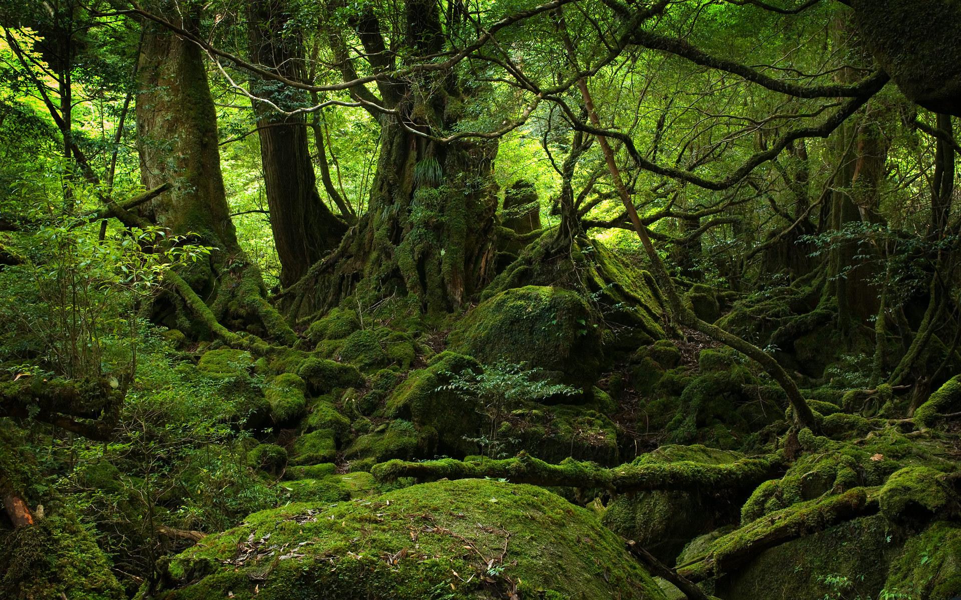 11483 скачать обои Пейзаж, Деревья, Фэнтези - заставки и картинки бесплатно