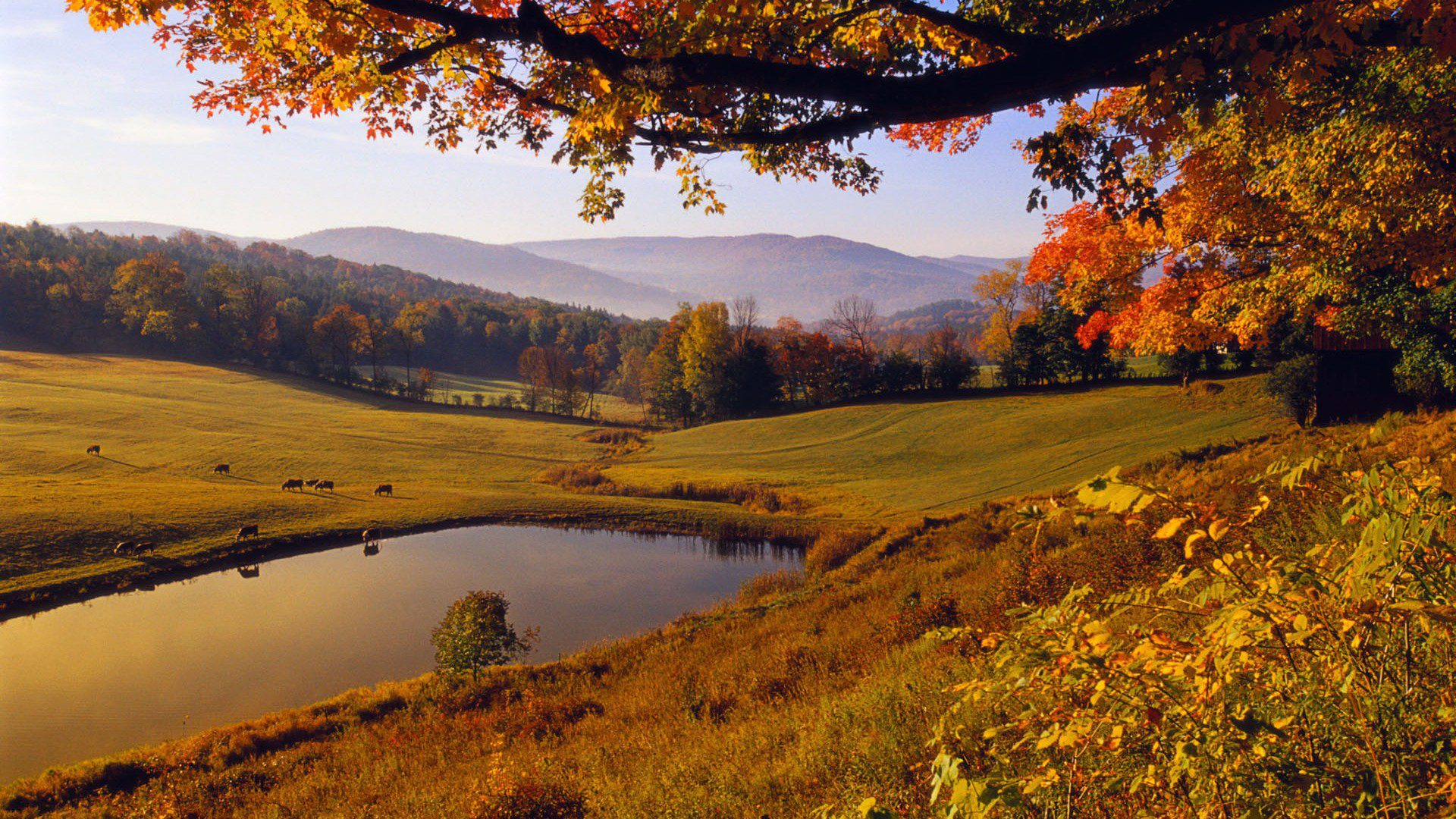 26904 download wallpaper Landscape, Trees, Autumn, Lakes screensavers and pictures for free