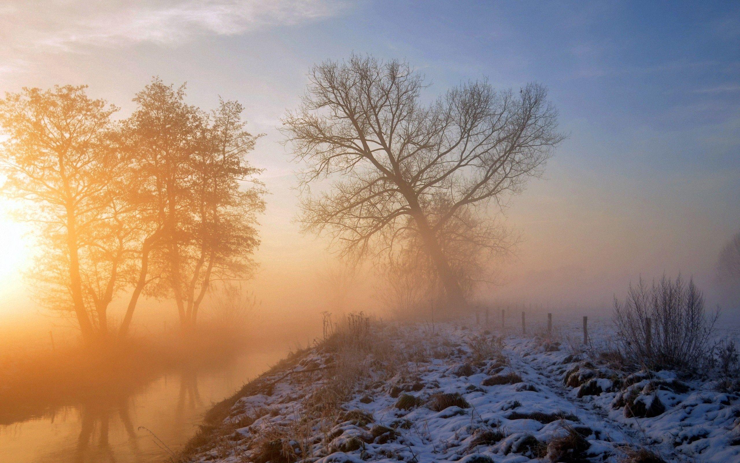 77872 Hintergrundbild herunterladen Natur, Grass, Schnee, Holz, Baum - Bildschirmschoner und Bilder kostenlos