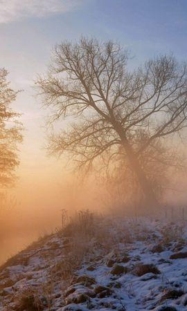 77872 Salvapantallas y fondos de pantalla Nieve en tu teléfono. Descarga imágenes de Naturaleza, Nieve, Hierba, Madera, Árbol gratis