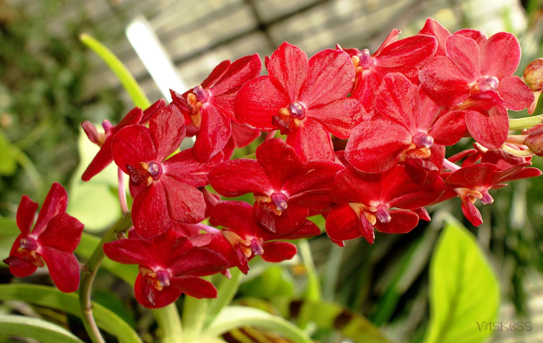 9718 descargar fondo de pantalla Plantas, Flores: protectores de pantalla e imágenes gratis