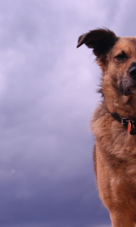 157900 download wallpaper Animals, Dog, Sight, Opinion, Ears screensavers and pictures for free
