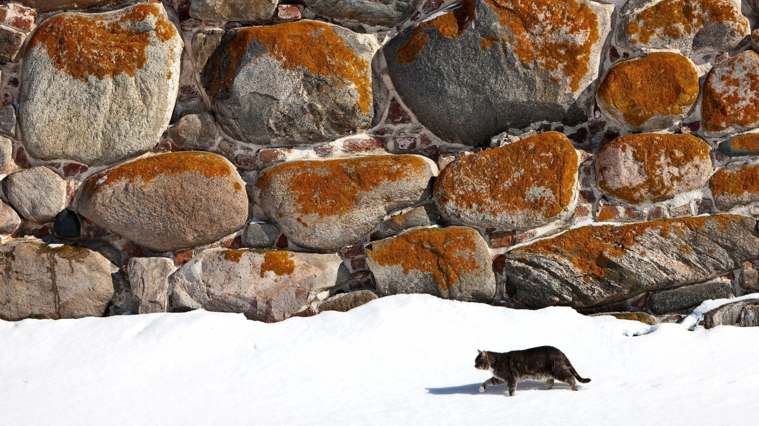 145058 download wallpaper Animals, Cat, Stroll, Snow, Wall, Stone screensavers and pictures for free