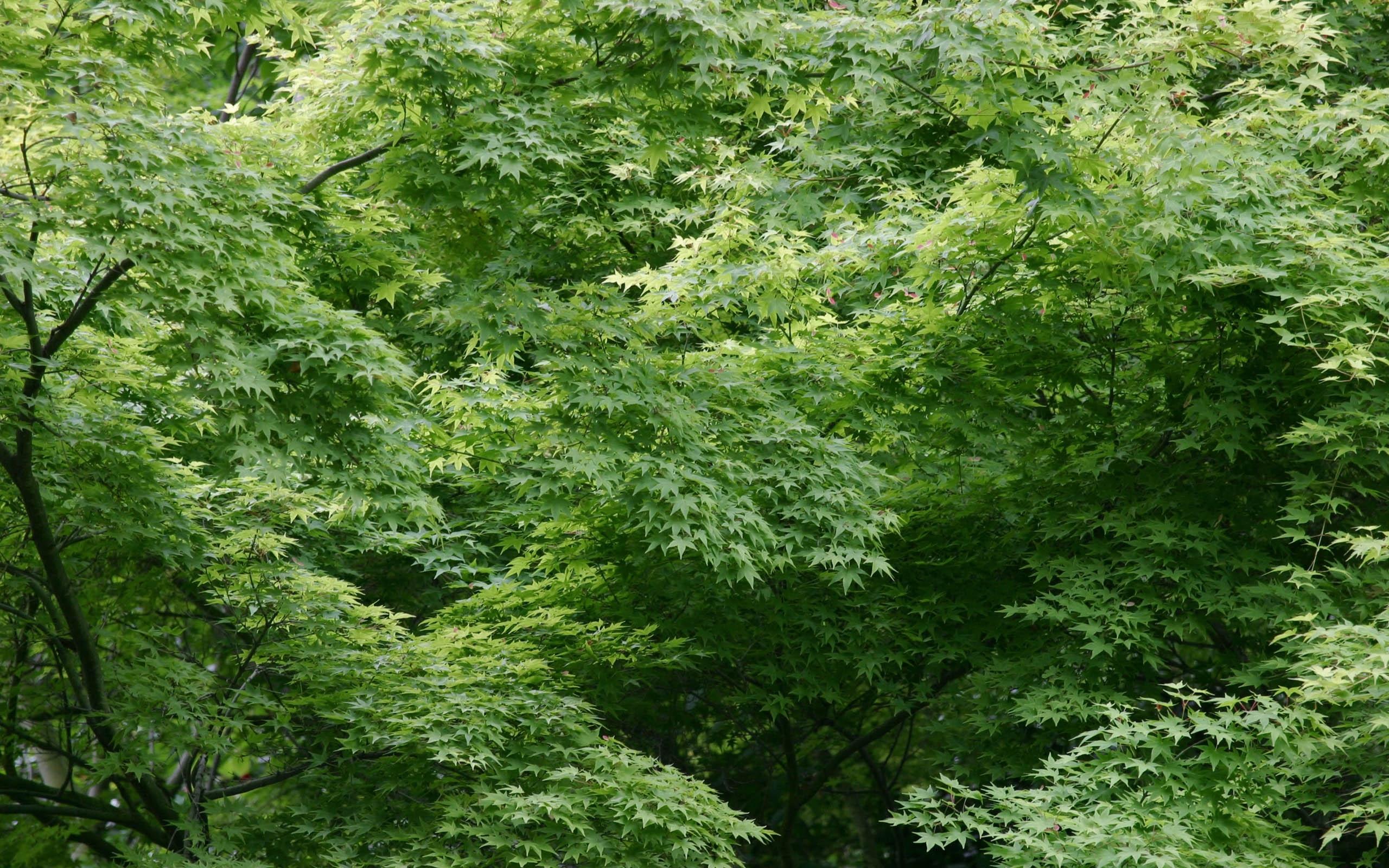 3291 скачать обои Растения, Деревья, Фон, Листья - заставки и картинки бесплатно
