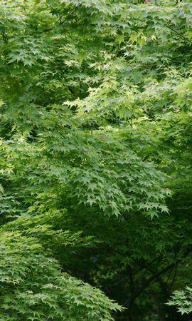 3291 descargar fondo de pantalla Plantas, Árboles, Fondo, Hojas: protectores de pantalla e imágenes gratis