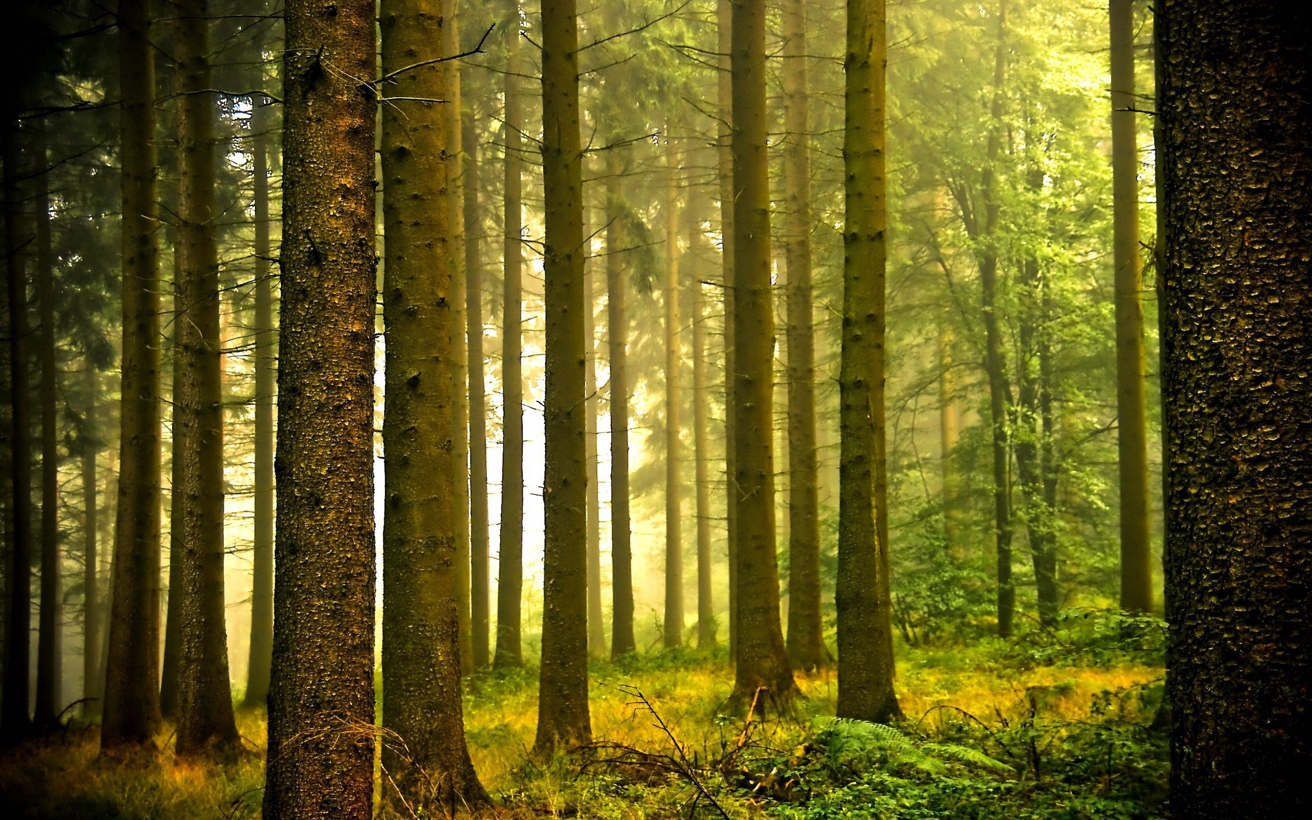144053 download wallpaper Forest, Nature, Morning, Cool, Haze, Coolness screensavers and pictures for free