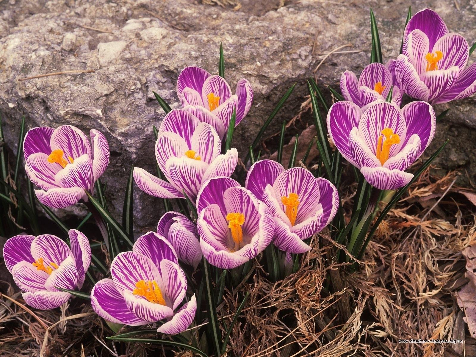 4176 скачать обои Растения, Цветы - заставки и картинки бесплатно