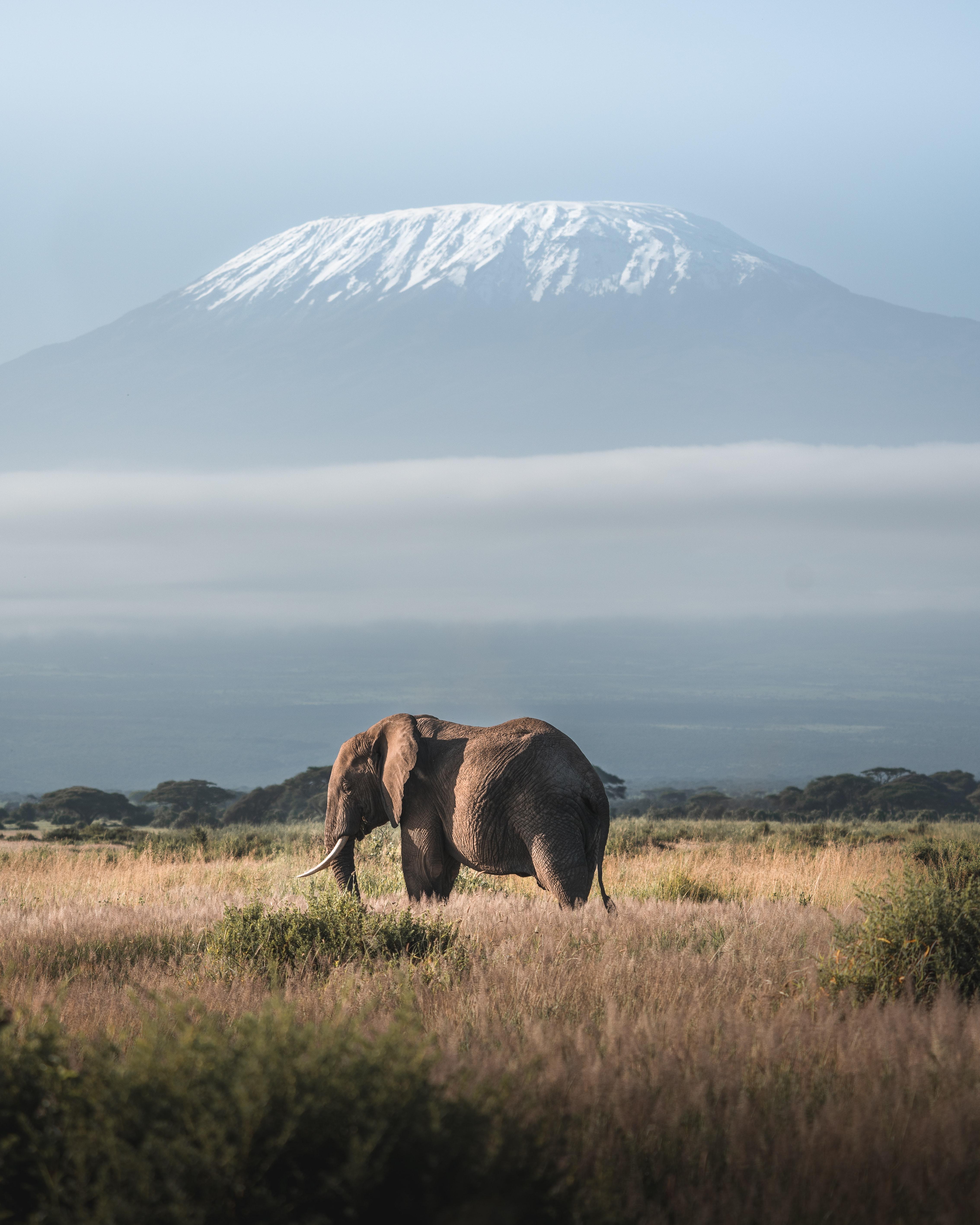 Скачать картинку Дикая Природа, Животное, Слон, Животные, Гора, Саванна в телефон бесплатно.