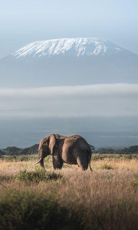 135943 скачать обои Животные, Слон, Животное, Гора, Саванна, Дикая Природа - заставки и картинки бесплатно