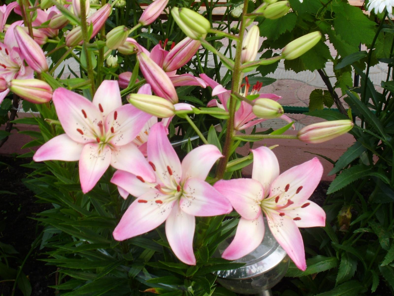 5834 скачать обои Растения, Цветы - заставки и картинки бесплатно