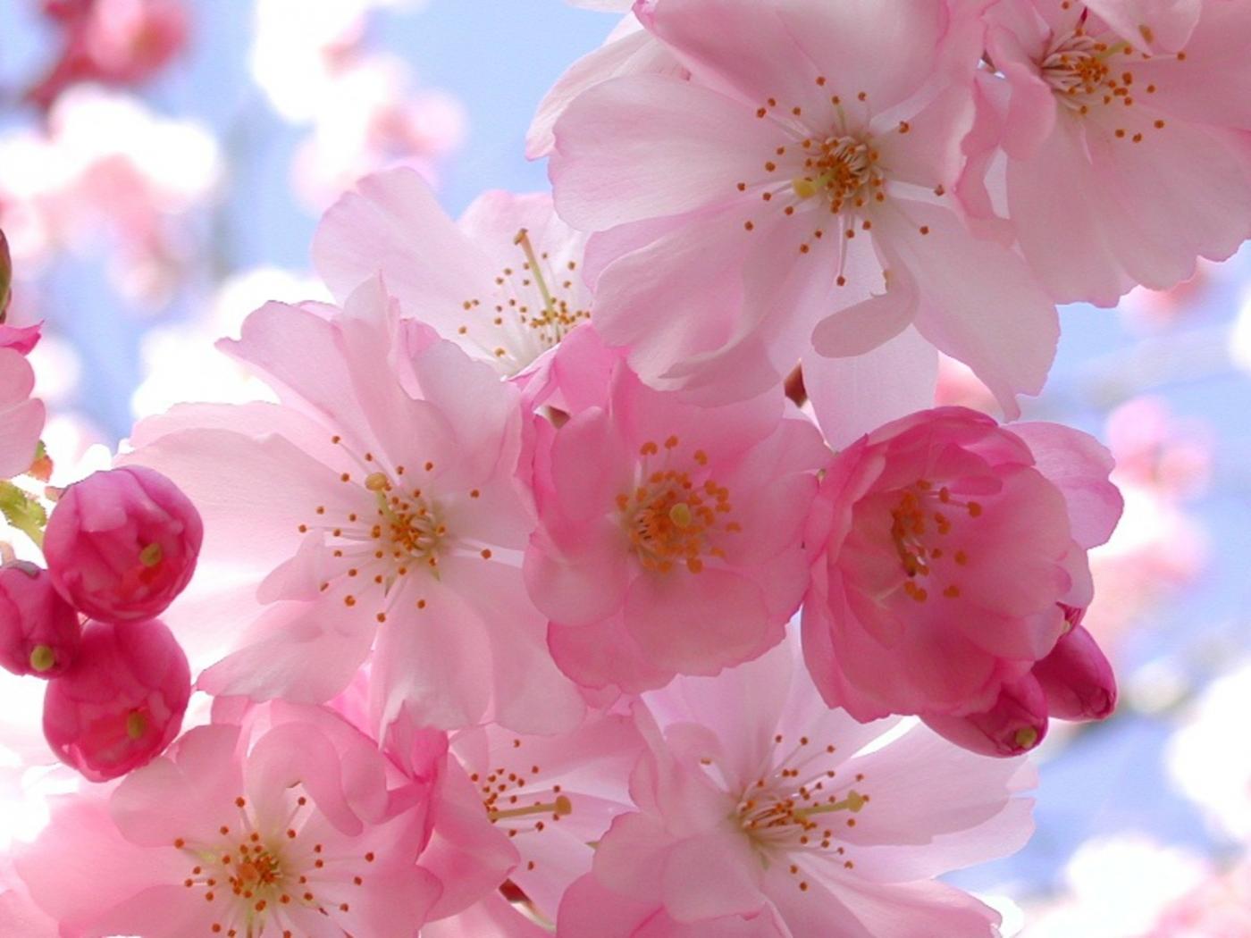 40281 скачать обои Растения, Цветы - заставки и картинки бесплатно