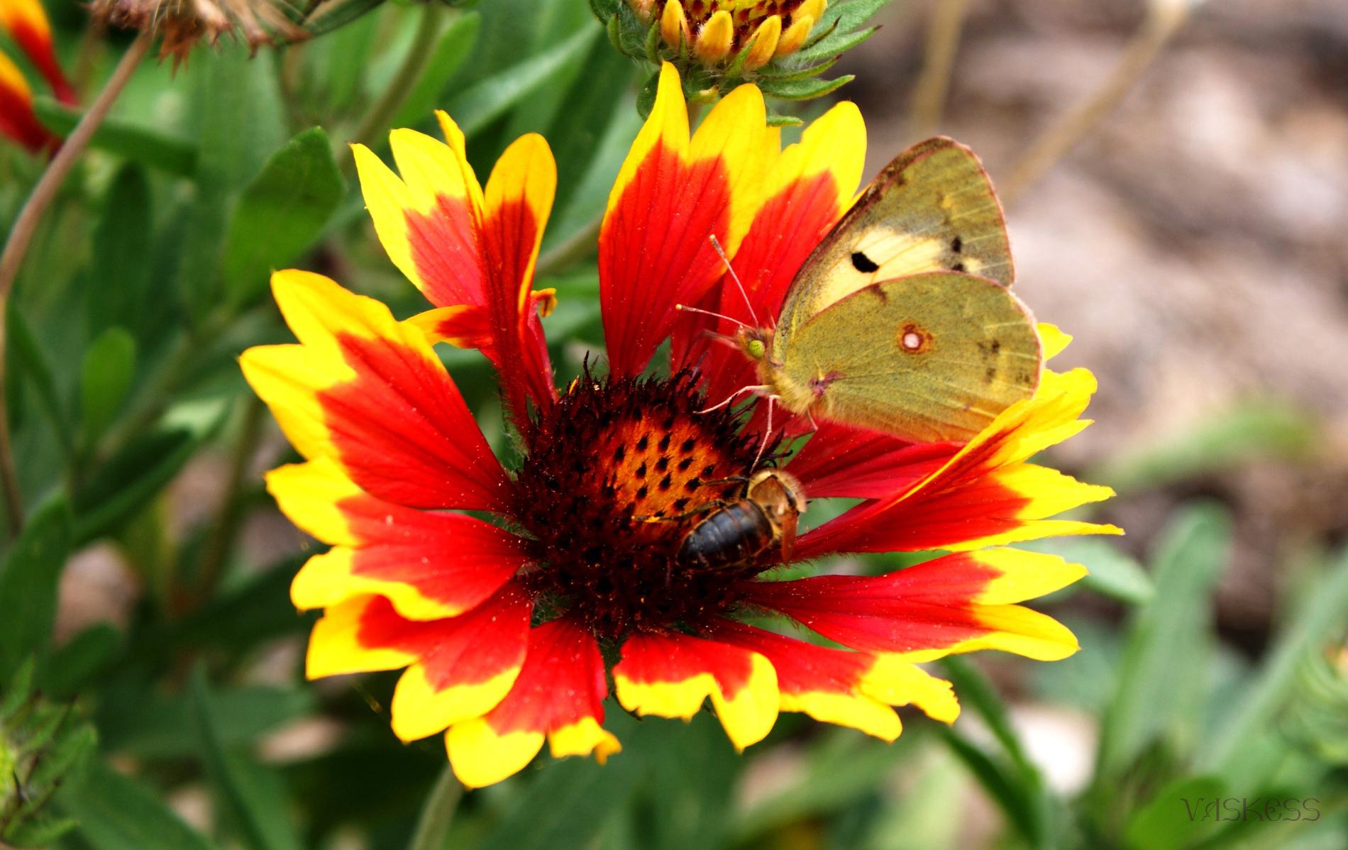 10176 descargar fondo de pantalla Plantas, Mariposas, Flores: protectores de pantalla e imágenes gratis