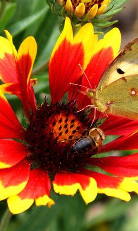 10176 скачать обои Растения, Бабочки, Цветы - заставки и картинки бесплатно