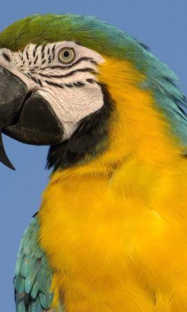 29775 baixar papel de parede Animais, Aves, Papagaios - protetores de tela e imagens gratuitamente