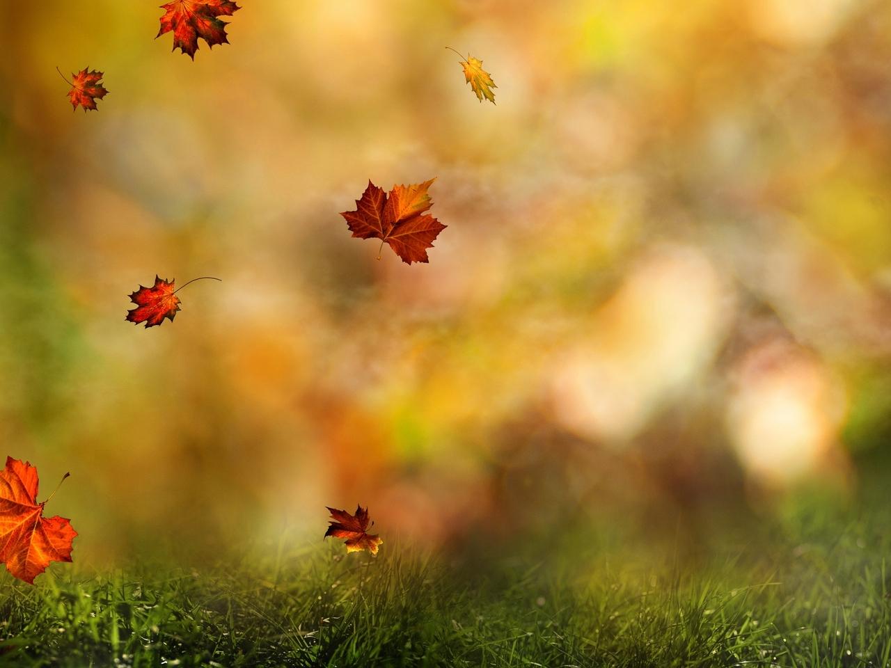 24498 скачать обои Растения, Пейзаж, Трава, Осень, Листья - заставки и картинки бесплатно
