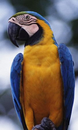 2502 download wallpaper Animals, Birds, Parrots screensavers and pictures for free