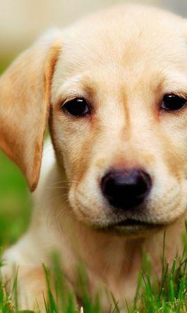41085 baixar papel de parede Animais, Cães - protetores de tela e imagens gratuitamente