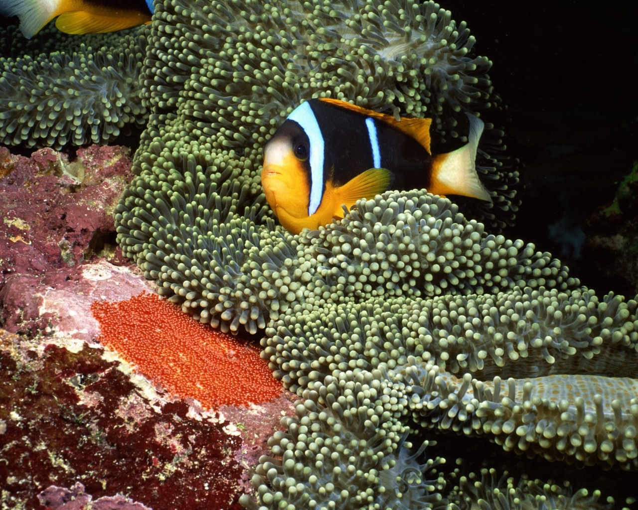 1592 download wallpaper Animals, Fishes screensavers and pictures for free